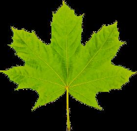 myTweak Leaf